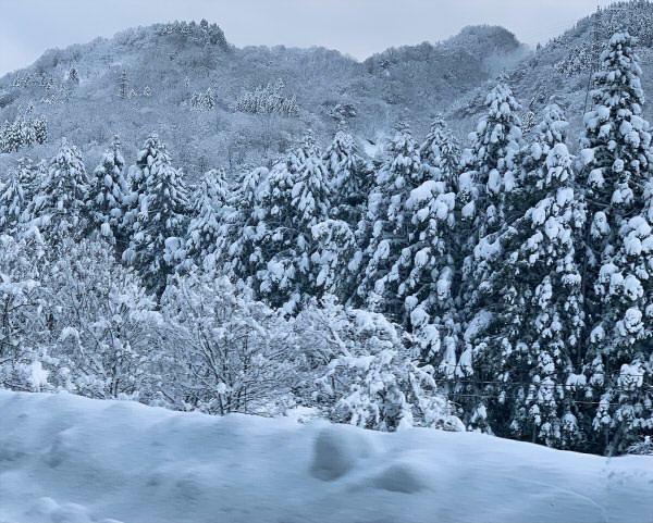 富山記録的な大雪2021